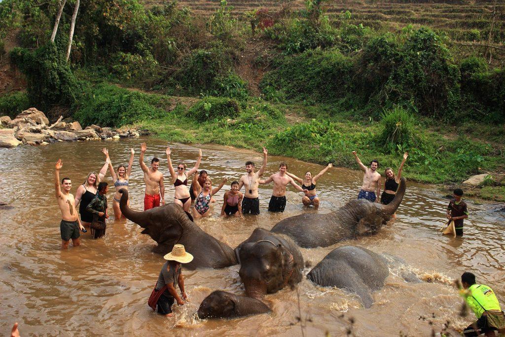 Elefanti Chiang Mai